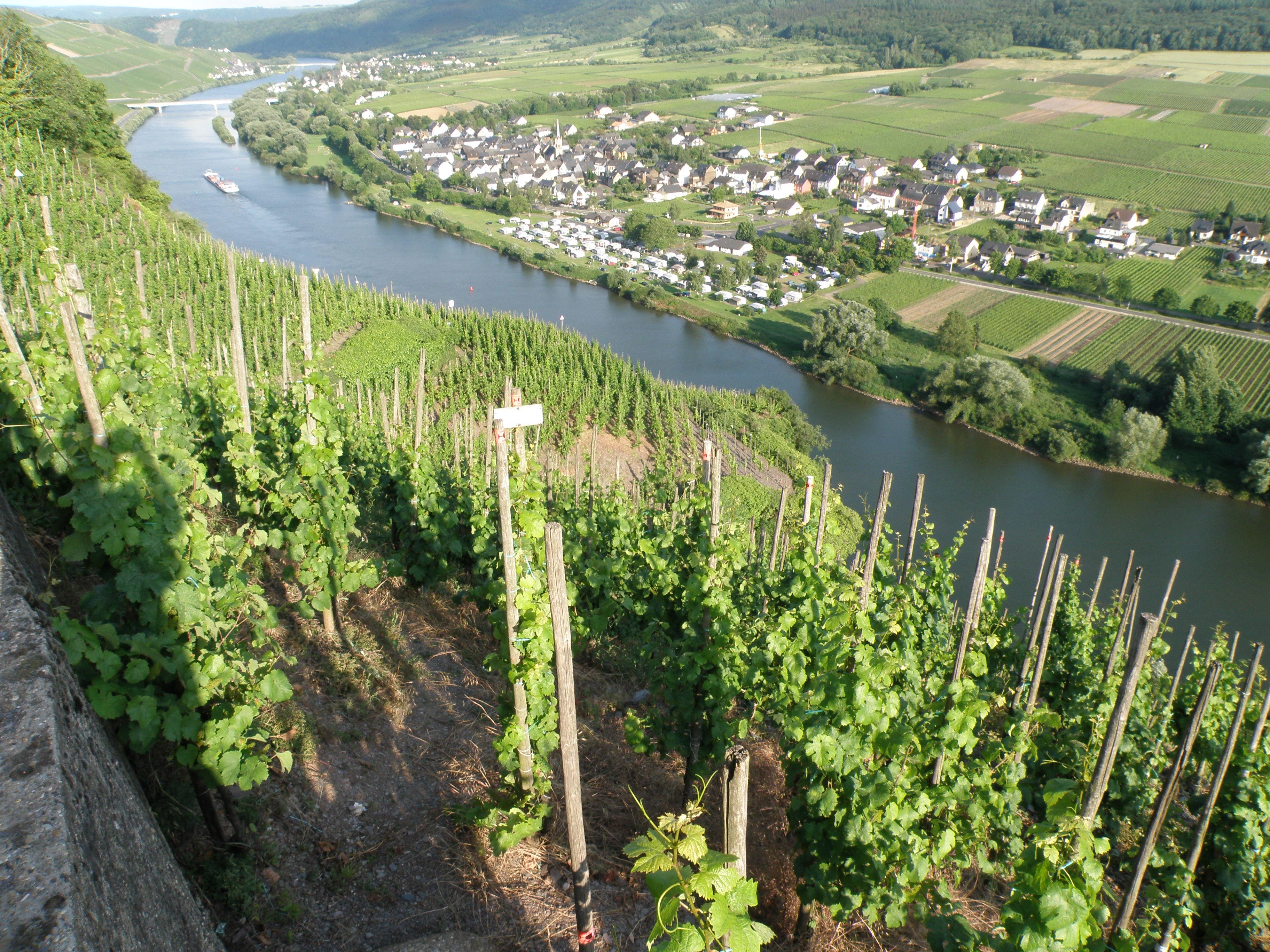I vini della Mosella e dell'Alsazia