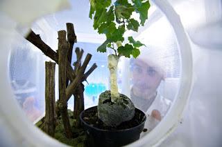 Valerio Rossi Stacconi, tecnico allevamento di insetti dannosi alle colture vegetali ai fini di sperimentazione.