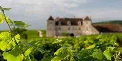 La Lettre des Vins de Bourgogne   N°81 / 15 Décembre 2017