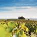 Le Figaro VinLa Newsletter du 19 avril 2018
