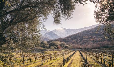 Le Figaro VinLa Newsletter du 05 avril 2018