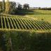 Le Figaro VinLa Newsletter du 29 août 2019